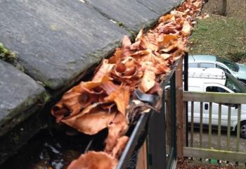 Gutter Leaf Clearing Basingstoke